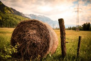 Hay bale in New Zealand Regional country